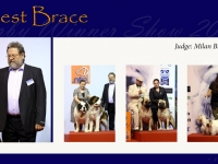 w-3_BEST_BRACE