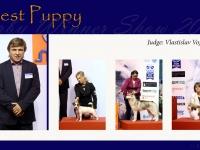 w-6_BEST_PUPPY