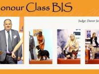 w-7_HONOUR_CLASS_BIS