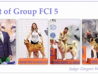 skupina-5