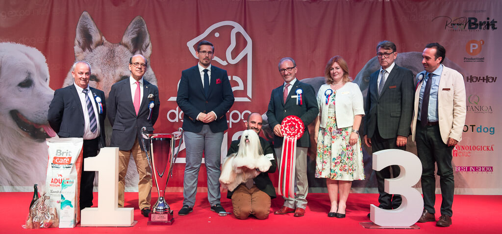 SUPREME BIS 10.6.2018 DERBY WINNER SHOW 2018 & CRUFTS QUALIFICATION